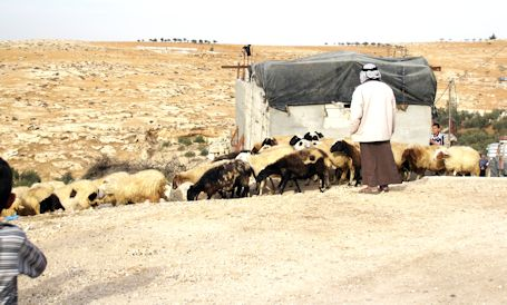 Photo of South Hebron Hills, West Bank, by Fran Adler