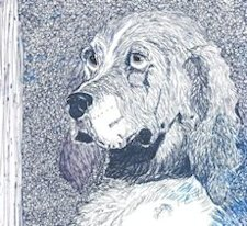 Pen and Ink Drawing of Spaniel by Kelley M. Smith